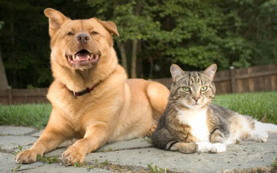 The Pet Inn & Spa at Wharton Veterinary Clinic